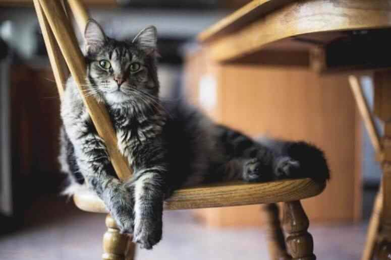 Tabby cat lying on chair