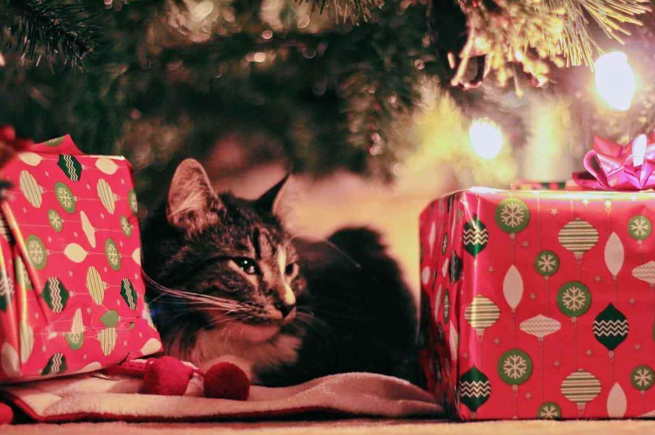 Cat lying under Christmas tree