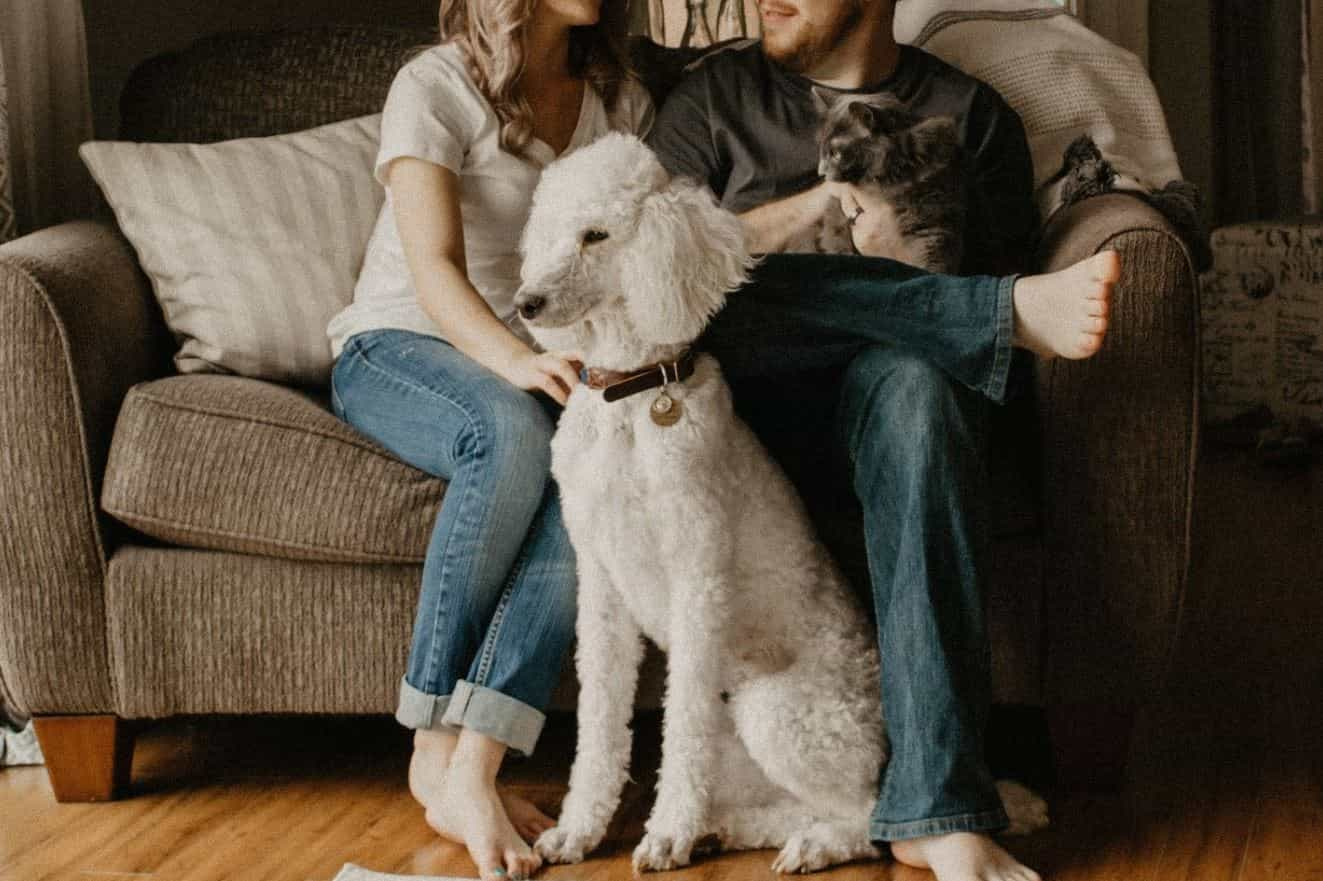 Dog, cat and couple in living room