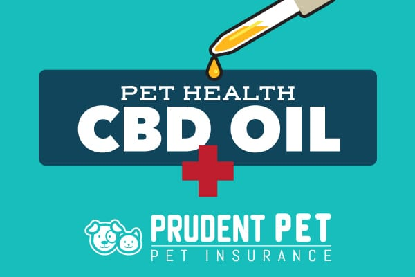 Breaking Down Myths of CBD Oil for Dogs | Prudent Pet Insurance