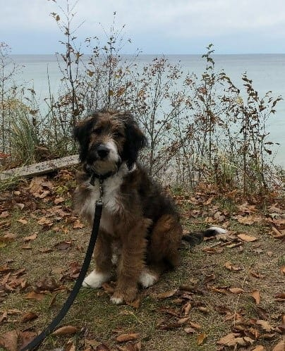 New Purebred And Cross Breed Dogs Of 2019 Prudent Pet