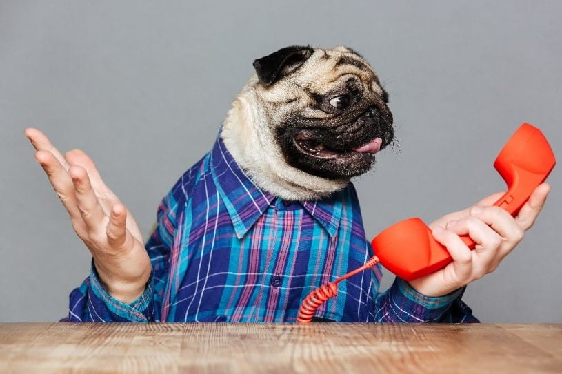 Humandog on the phone