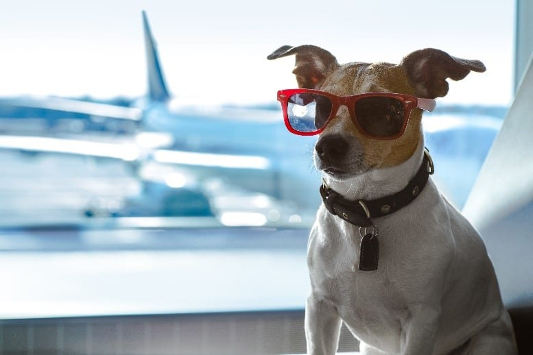 Dog wearing glasses at airport