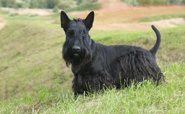 Barney is George Bush's dog