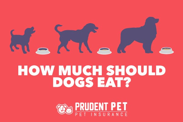 How Much To Feed Your Dog Prudent Pet Insurance