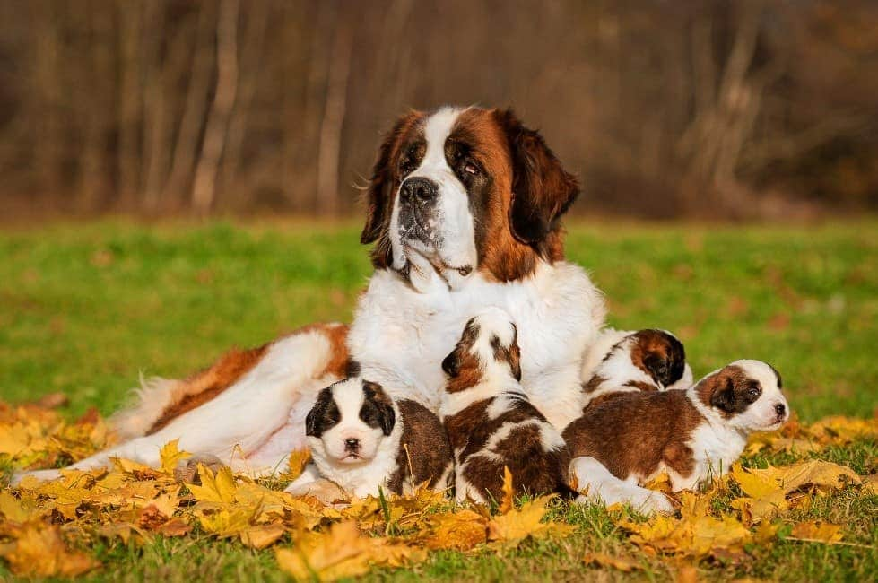 Parent and puppies hang out in park