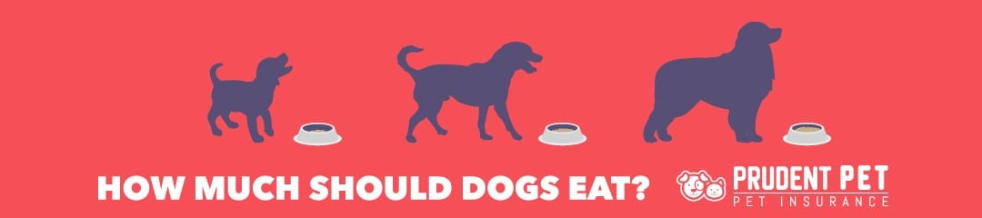 How much should my dog eat blog post from Prudent Pet