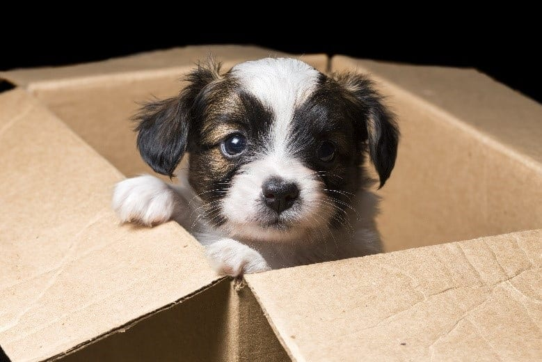 Puppy in a cardboard moving box