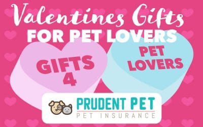 Valentine's Day Gifts for Pet Lovers