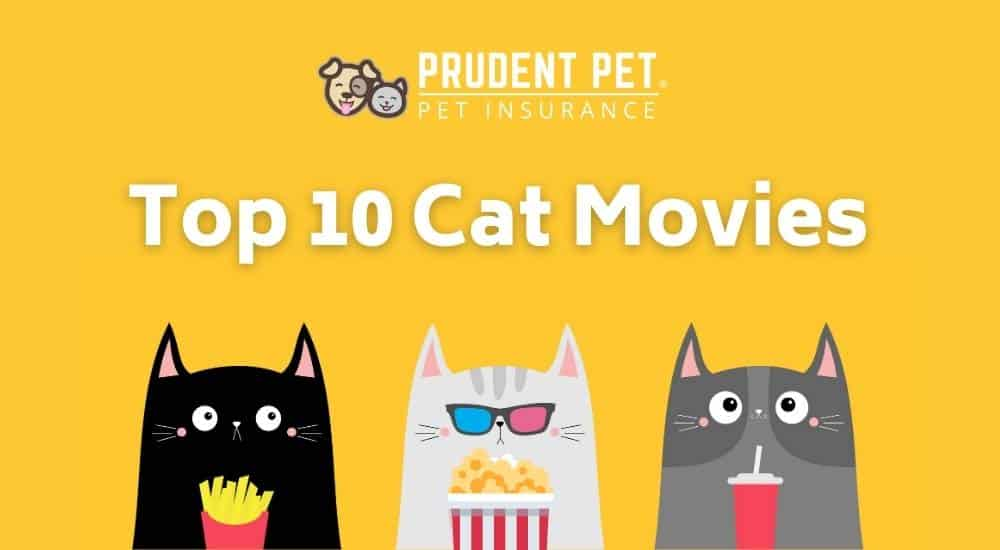 Three kitties eating snacks at movie