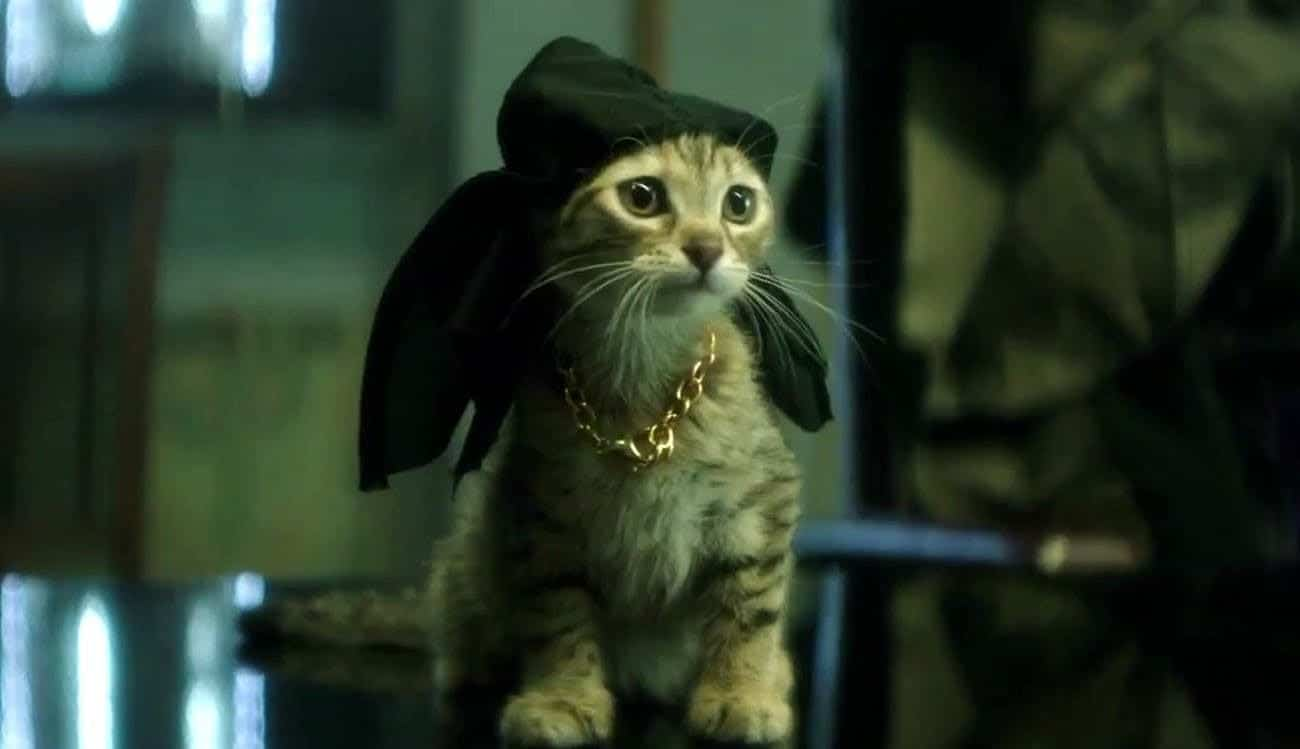 Keanu is a great action-comedy about a tough, yet adorable, kitten