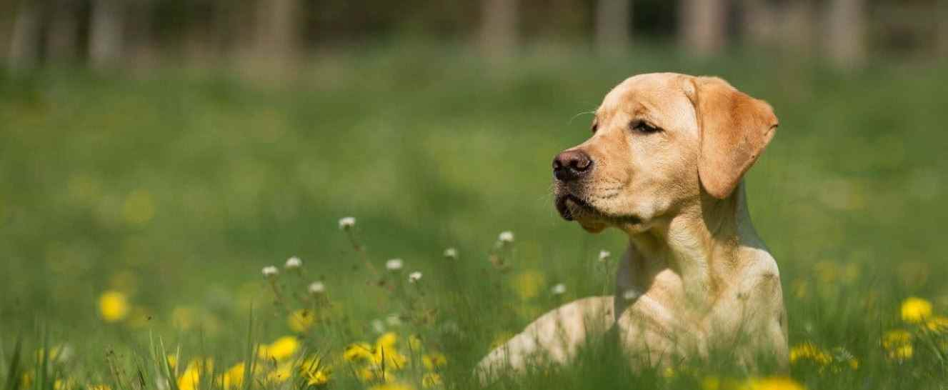 Mental Disorders in Dogs | Prudent Pet Insurance
