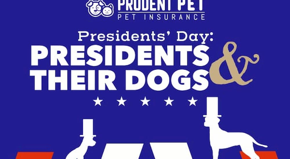 Presidents and their dogs