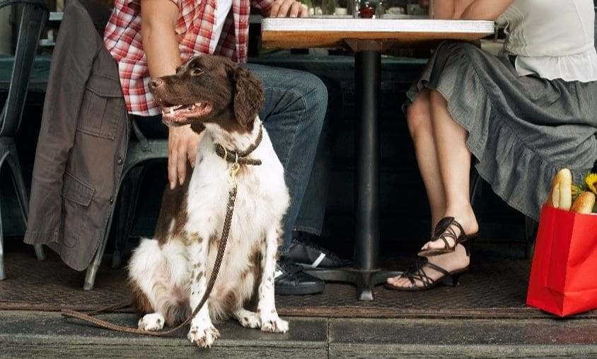 Dog sitting under the table at restaurant
