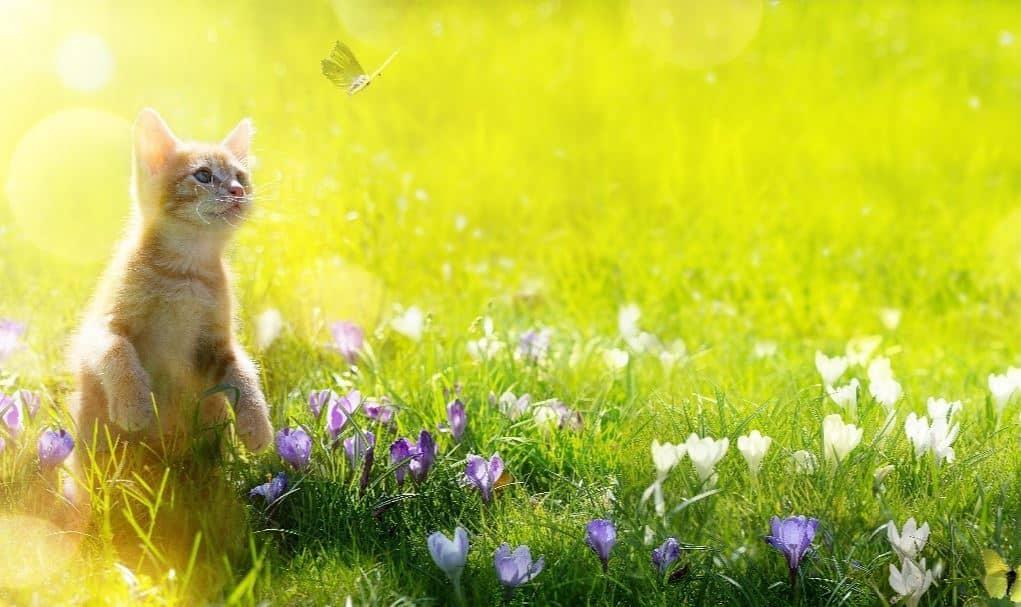 Cat at a park
