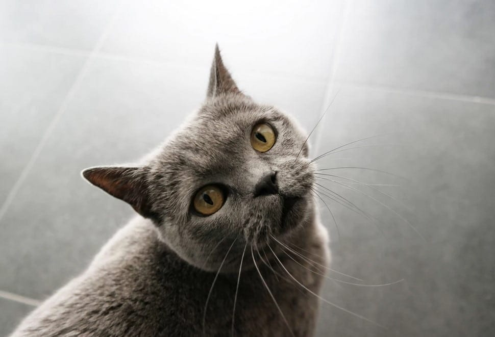 Cat looks up the camera