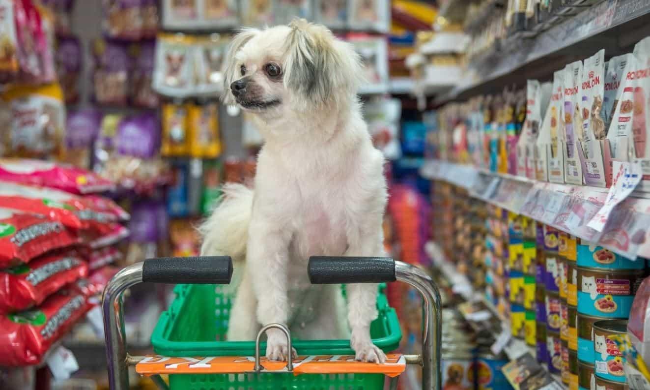Dog sitting in a shopping cart