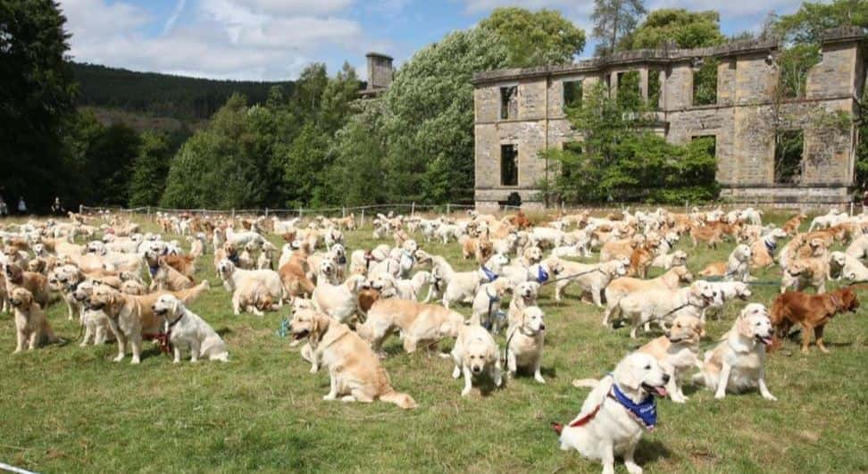 200 Goldens took place in the Scottish Highlands.