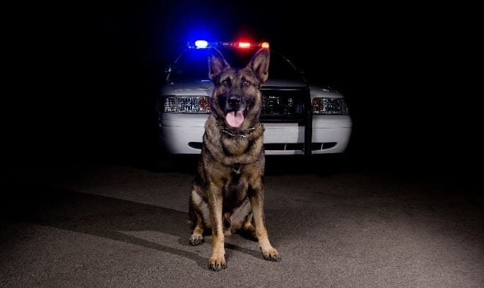 k9 dog and police car