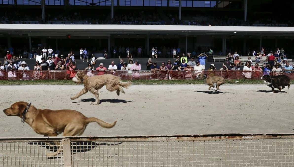Pups of all breeds gathered at Derby Lane in St. Petersburg, FL