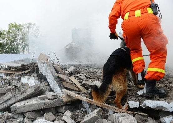 Rescue dog in action