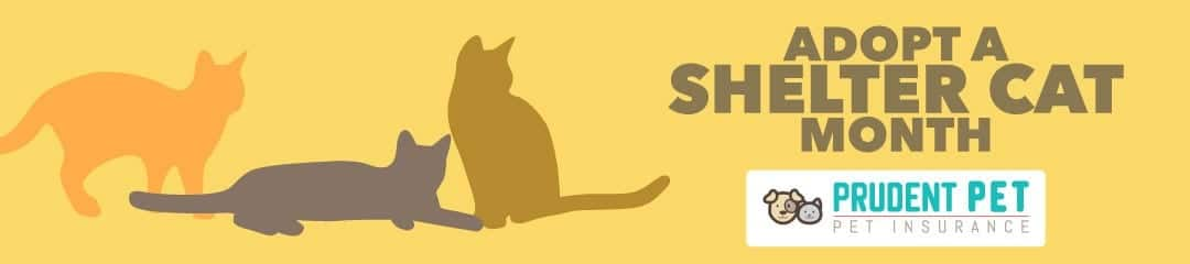 Adopt a Shelter Cat Month post from Prudent Pet