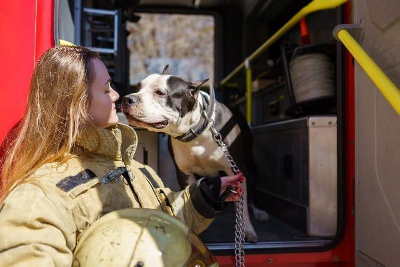 Badass Dogs: Firefighter Dogs