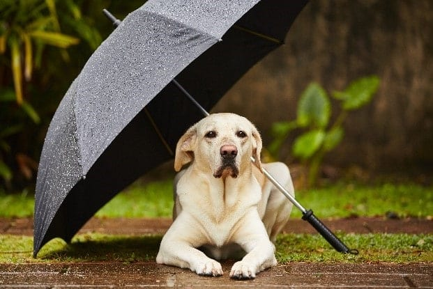 Dog sits under umbrella