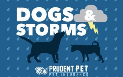 Dogs and Storms