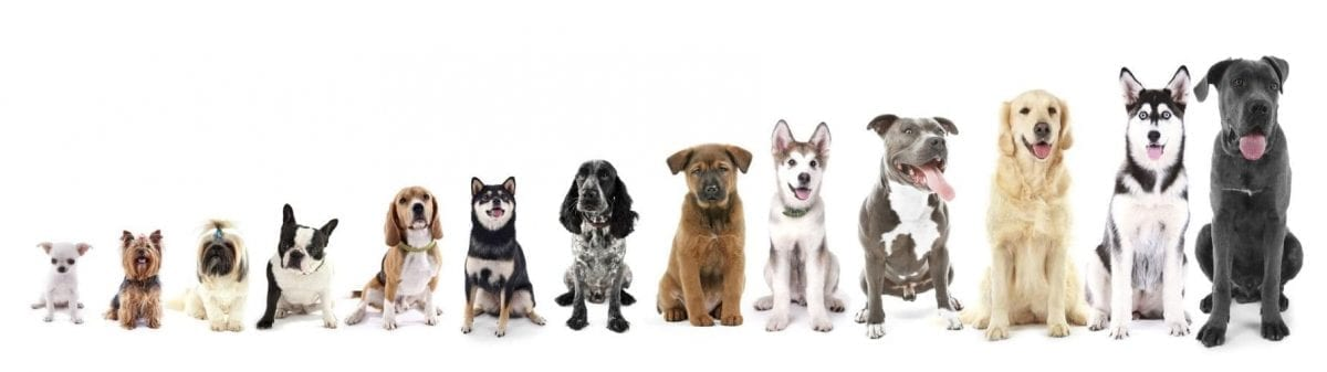 Many mutts in line by height