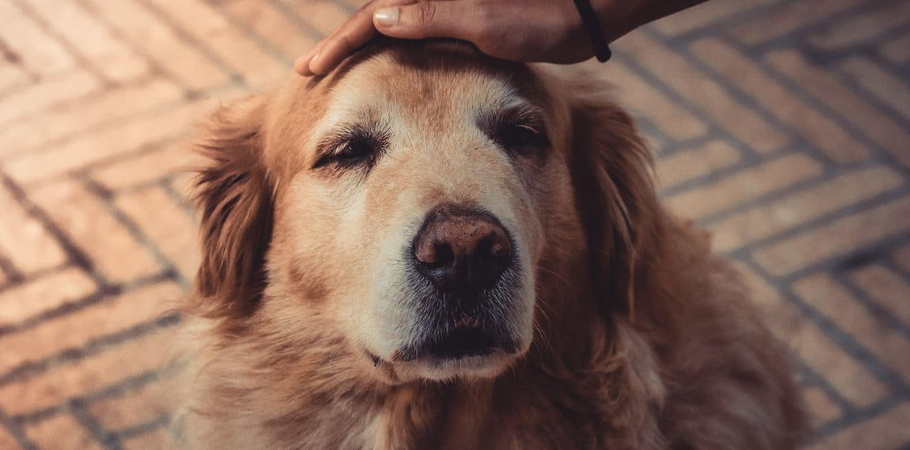 Petting old dog to calm down