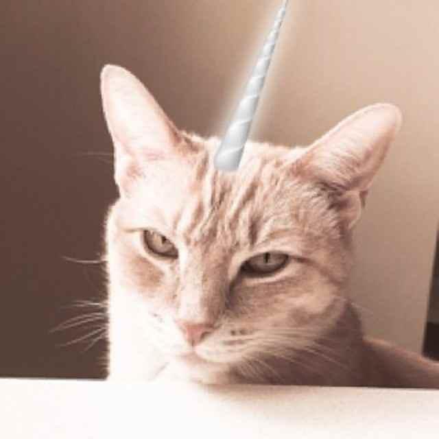 Grumpy Caticorn getting a unicorn horn