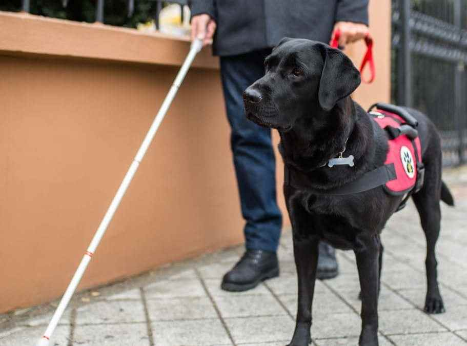 International Assistance Dog Week 2019