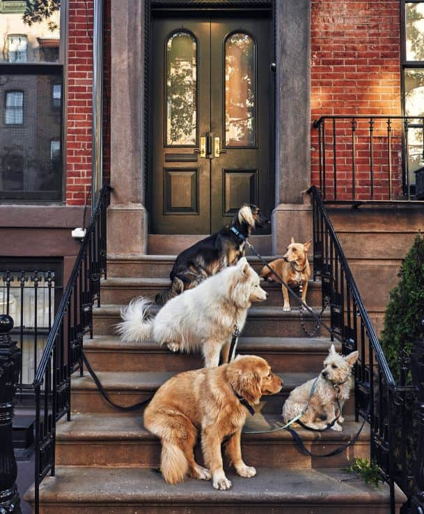 Kinds of dogs sit at stairs