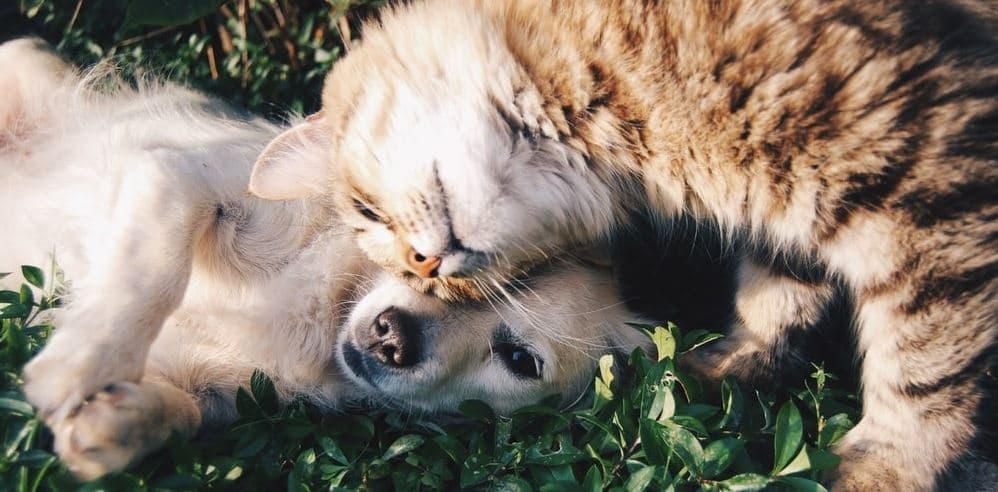 Cat and dog hanging on grass