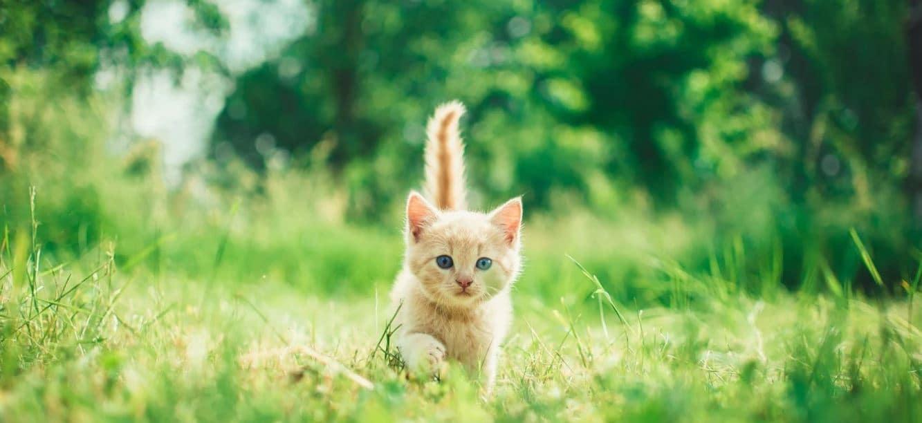 Cat running the spring park