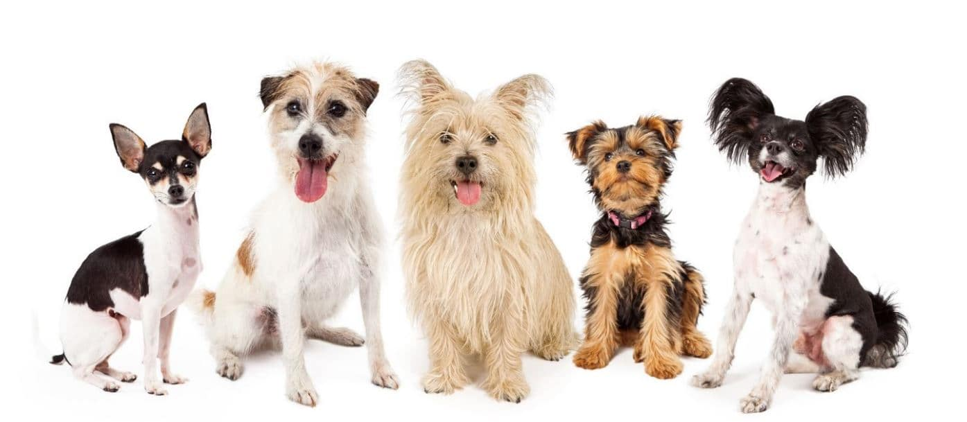 Different breeds in white background