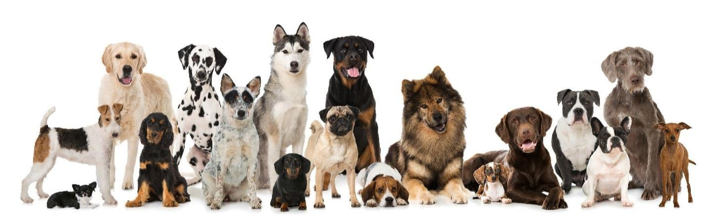 Many dogs in line