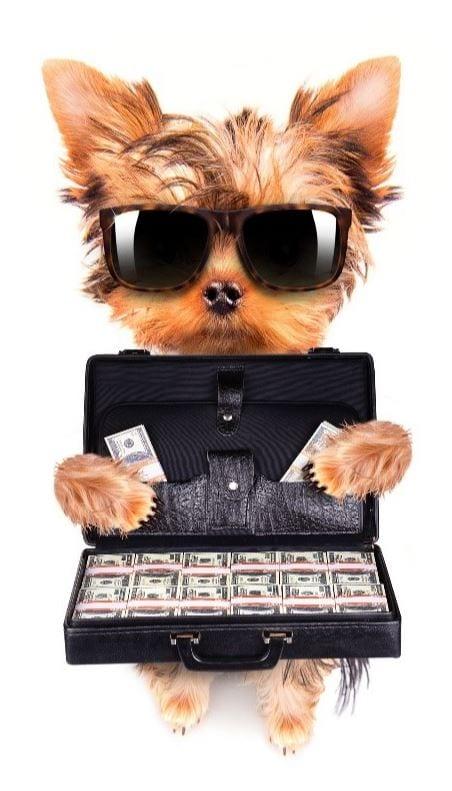 Dog holds bills in case