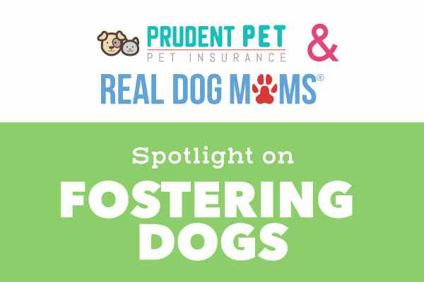 Fostering Medical Dogs: A Chat with Stephanie Thomas