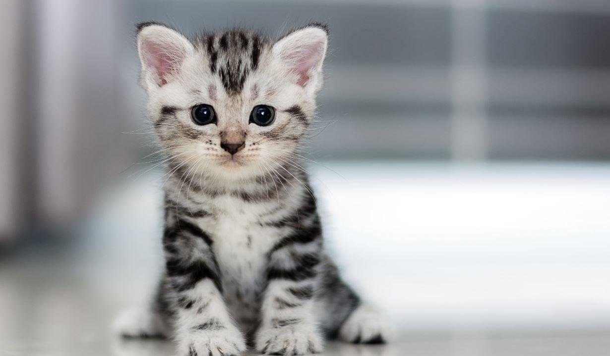 Kitty sitting on hallway