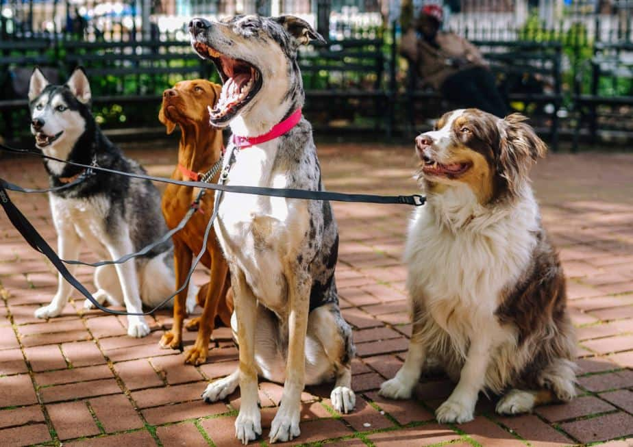 Finding the Best Dog Breed for You!