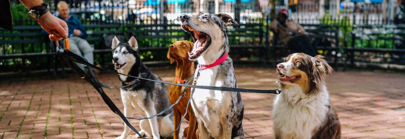 Finding the Best Dog Breed for You article from Prudent Pet