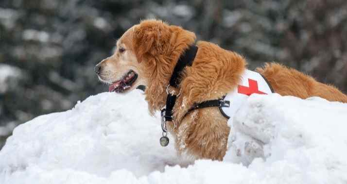 Badass Dogs: Search and Rescue Dogs