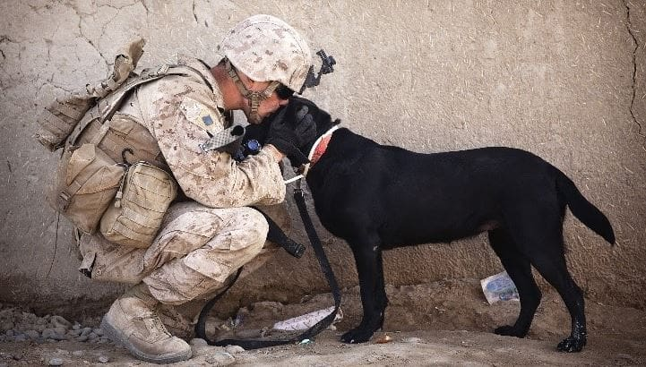 Soldier kisses a military dog