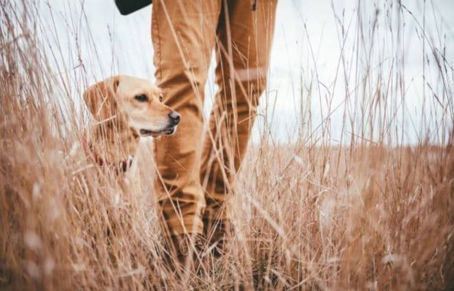 Dog and man walk through bush
