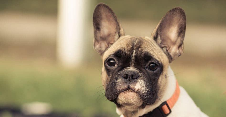 Keep dog collar at dog park