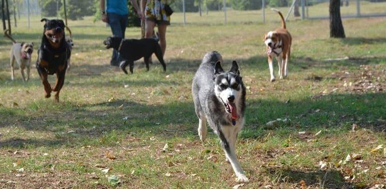 Dogs running around in dog park
