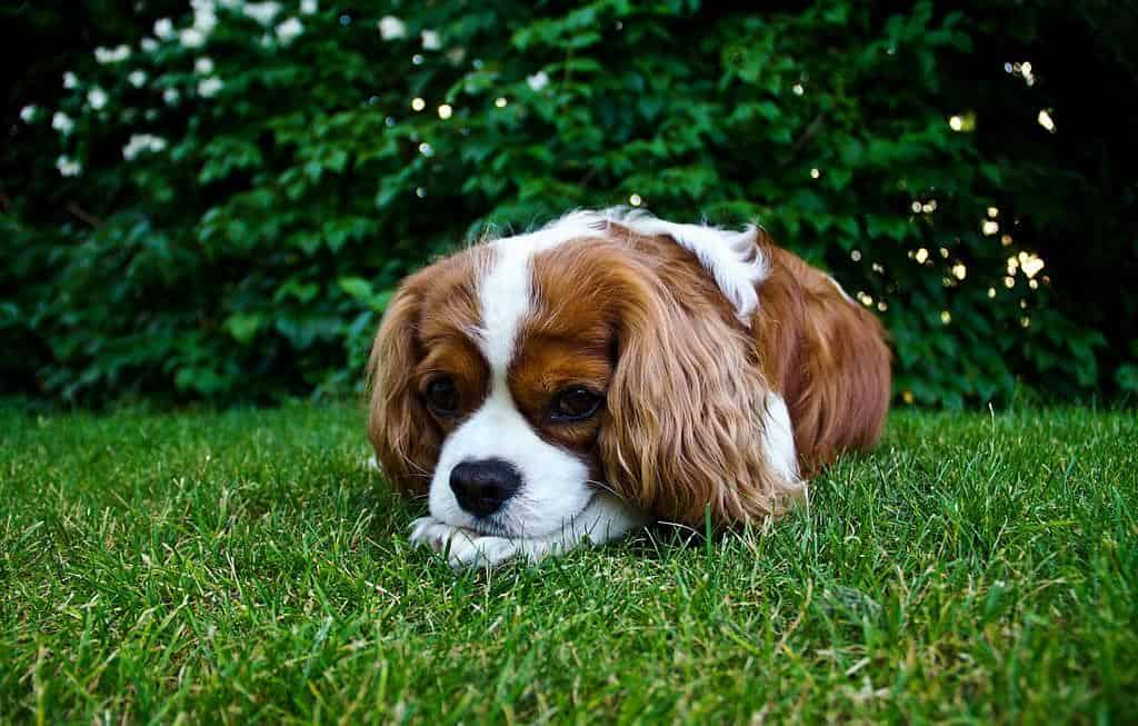 Small dog sits on grass