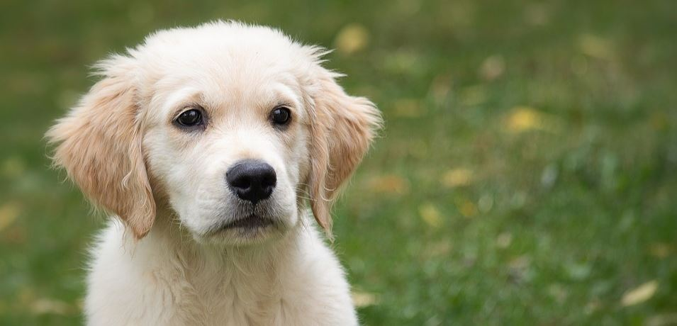 White dog looks spacing